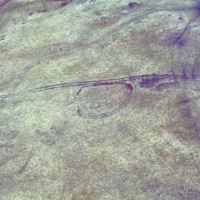 http://www.discoveryprogramme.ie/images/Aerial_Archives_Images/temp3/LS_AS_35CT_00080_20 copy.jpg